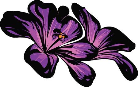 Image of wildlife plants two florets purple Vector