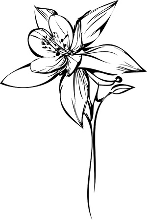 color image of a houseplant small orchid Illustration