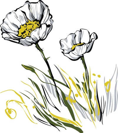 color image of Two white poppy plants Illustration