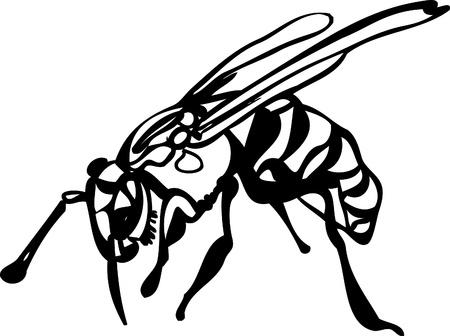 Image of wildlife wasp on white background Illustration