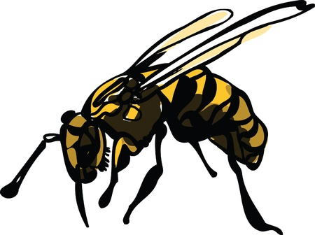 Image of wildlife wasp on white background Vector