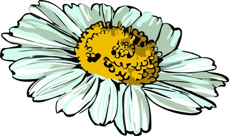 daisy wheel: daisy wheel picture of nature flower sketch