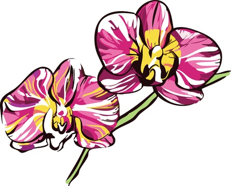 two orchids with yellow center and violet petals a