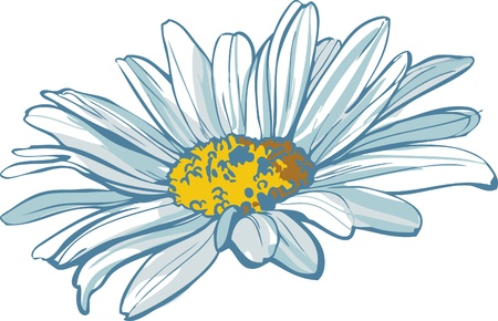 color image of the flower of white color chamomile