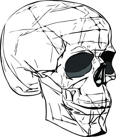 forehead: human skull