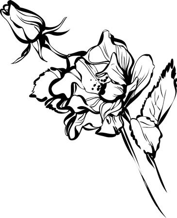 black and white drawing of a flower bud of a beautiful