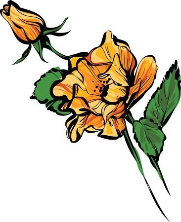 orange rose: a ORANGE big and small  rose buds Illustration