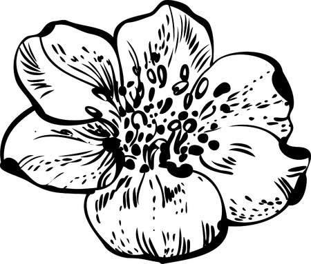 detail of bunch: black and white drawing of flower buds blossoming