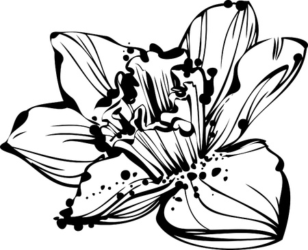 black and white picture sketch bud Narcissus
