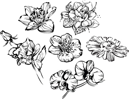 tattoo flower: black and white drawing of beautiful composition of flowers Illustration