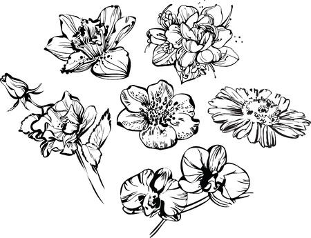 traino: disegno in bianco e nero di bella composizione di fiori Vettoriali