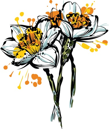 beautiful color picture three flowers of narcissus Illustration