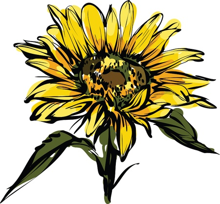 a beautiful color picture yellow sunflower design