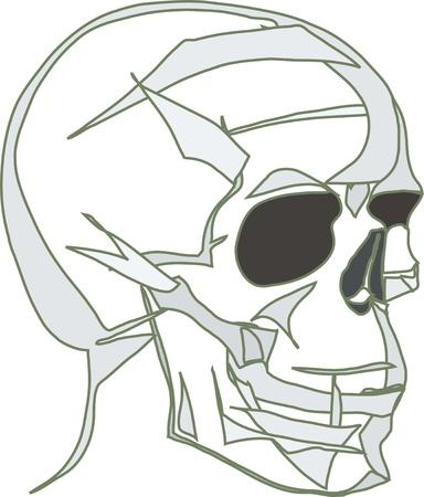 eye sockets: image of human skull  by black empty eye sockets