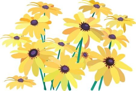 yellow camomiles Stock Vector - 10644415