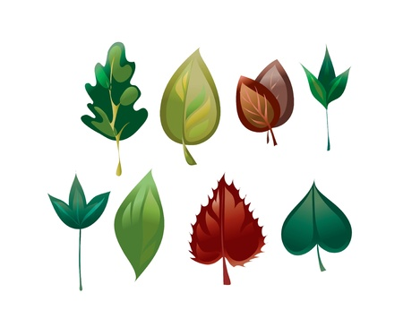 frizz: image of different leaves of different trees