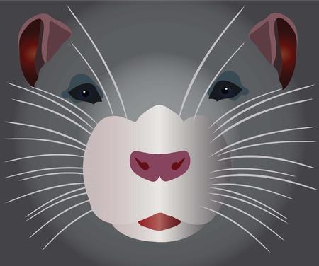 roedor: roedor gris