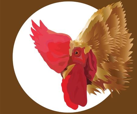 cock Stock Vector - 10644458