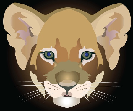 lion cub Stock Vector - 10644439