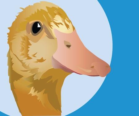 drake: duck Illustration