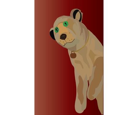 tsar:      lion cub with green eyes