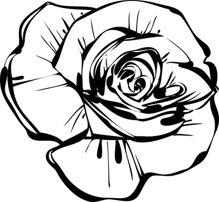 sketsh of rose Vector
