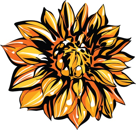 a image of nature colored sketch of chrysanthemum Stock Vector - 10681101