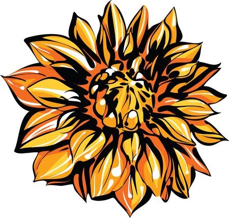 een afbeelding van de natuur gekleurde schets van chrysant Stock Illustratie