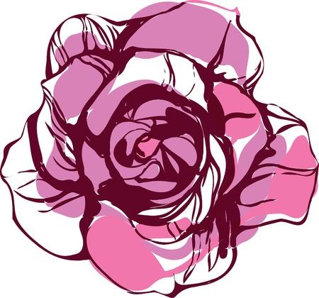 ein Bild von der Natur rosa Teerose Illustration