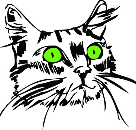 green eyes: a muzzle of a cat with green eyes Illustration