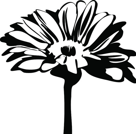 black and white picture of nature daisy flower on the stalk Vector