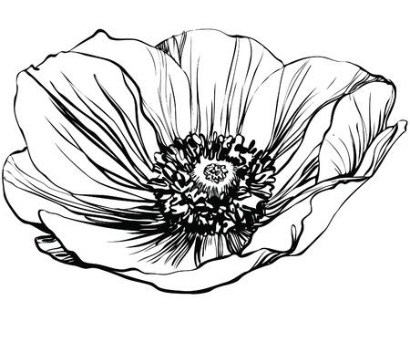 une fleur photo noir et blanc du pavot