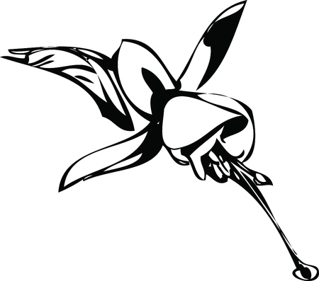a black and white picture flower bud Vector