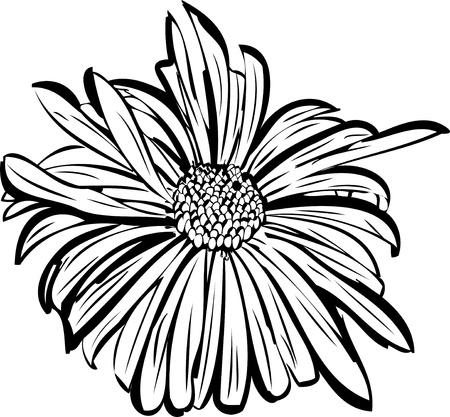 flower garden resembling a daisy Vector