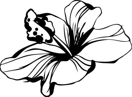 암술: 히비스커스 꽃 봉오리 꽃이 만발한 스케치