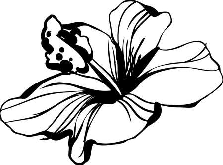 stamen: sketch blossoming hibiscus flower bud Illustration