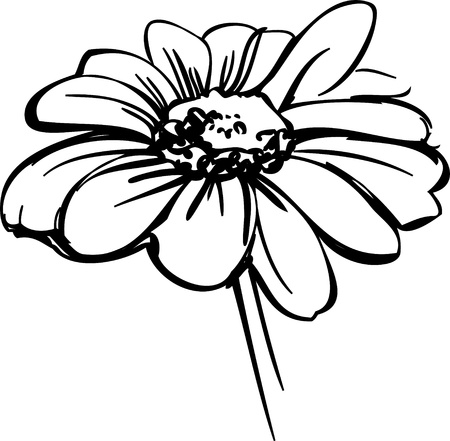 black and white flowers: sketch wild flower resembling a daisy Illustration