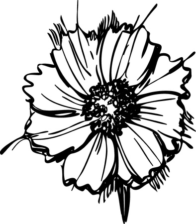 drawings image: sketch wild flower resembling a daisy Illustration