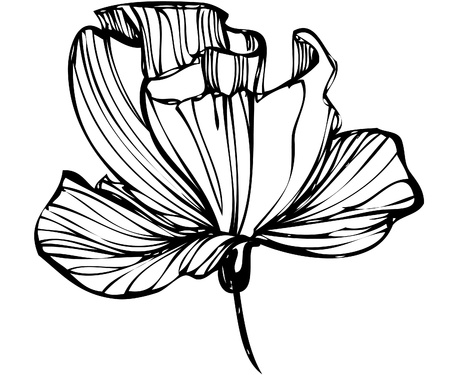 flower sketch: sketch of flower buds on a white background Illustration