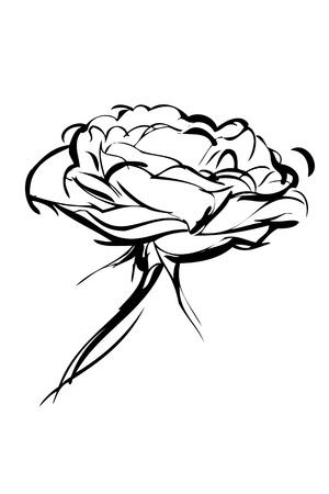 sketch of rose on a white background Stock Vector - 14764062