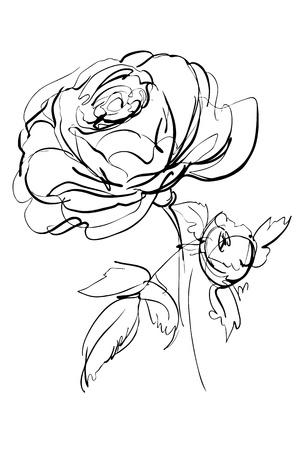 róża: szkic róży na białym tle