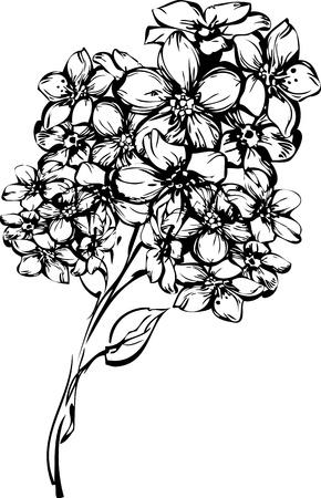 a sprig: esbozar una ramita con peque�as florecillas
