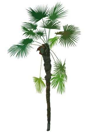 hedge trees: a image of a tropical plant tree Illustration