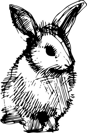 sketch drawing: a image of a rabbit with long ears