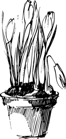 clay pot: black-and-white image of blooming potted flowers in a pot  Illustration