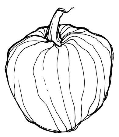 a sketch of ripe pumpkin on white background Vector