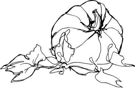 a sketch of ripe pumpkin on white backgroundp Vector