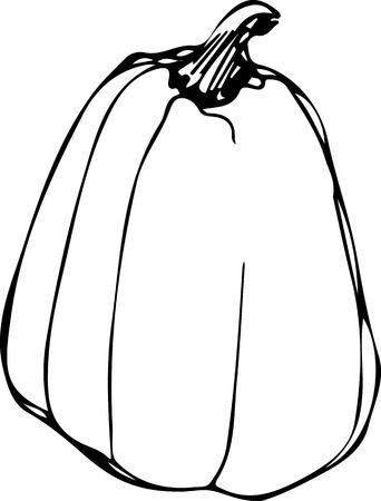 sketch of ripe pumpkin on white backgroundp Vector