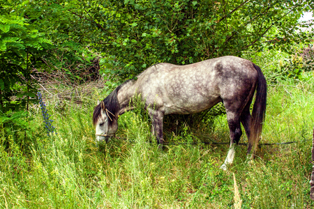 Image tethered horse grazing in a grove