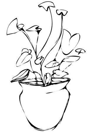 flower room: black and white vector sketch room Syngonium flower in a pot